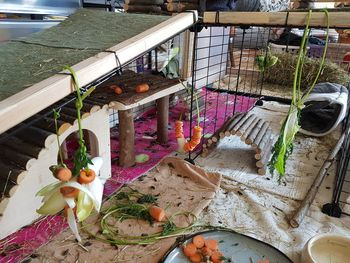 Knabberstationen für Meerschweinchen - Lili